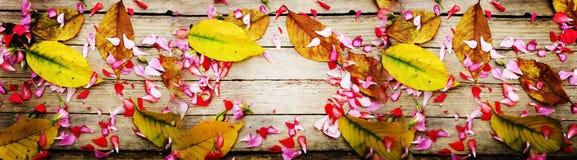 Fiori e foglie su struttura di legno Fotografia Stock