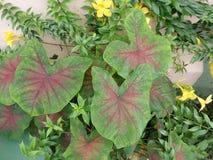 Fiori e foglie tropicali su Bequia Immagini Stock
