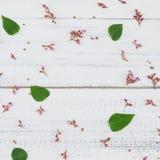 Fiori e foglie verdi rosa della frutta di stella Immagine Stock