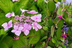 Fiori e foglie verdi rosa in giardino fotografie stock libere da diritti