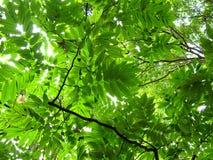 Fiori e giardini 7 Fotografia Stock Libera da Diritti