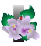 fiori e insetto Fotografia Stock Libera da Diritti