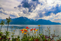 Fiori e lago Ginevra Fotografia Stock
