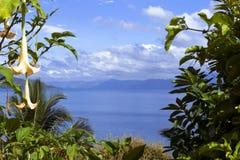 Fiori e lago Toba. Immagini Stock