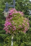 Fiori e lampada di via Fotografia Stock Libera da Diritti