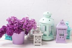 Fiori e lanterne lilla del brigh su fondo di legno bianco Immagini Stock