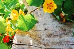 Fiori e legno Fotografia Stock Libera da Diritti