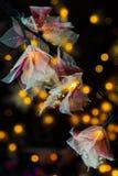 Fiori e luci per natale Fotografie Stock