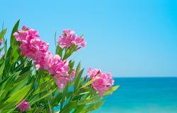 Fiori e mare dell'oleandro Fotografia Stock