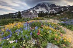 Fiori e montagna Immagini Stock
