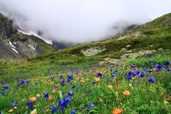 Fiori e montagne. Fotografia Stock