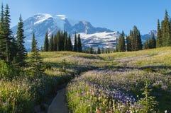 Fotografia stock: alberi e prati verdi e montagne nevose in monte