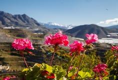Fiori e montagne Spagna immagine stock