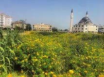 Fiori e moschea gialli Fotografie Stock Libere da Diritti