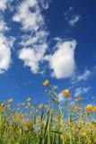 Fiori e nubi Fotografie Stock Libere da Diritti