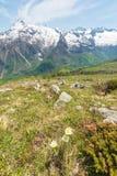 Fiori e paesaggio alpini nella primavera Fotografia Stock