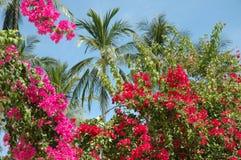 Fiori e palma tailandesi Fotografie Stock Libere da Diritti