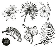 fiori e palma tropicali Immagini Stock Libere da Diritti