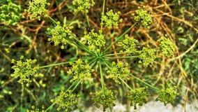 Fiori e pianta Fotografia Stock