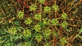 Fiori e pianta Immagine Stock