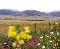 Fiori e piante fotografia stock libera da diritti