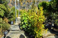 Fiori e piante d'appartamento nella serra nell'inverno fotografia stock libera da diritti