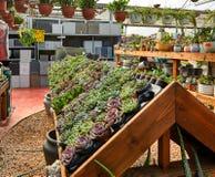 Fiori e piante d'appartamento nella serra nell'inverno immagine stock libera da diritti
