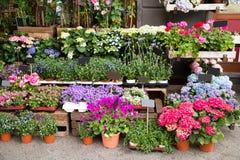 Fiori e piante fuori del negozio Immagine Stock