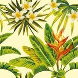 Fiori e piante su un fondo giallo Fotografia Stock