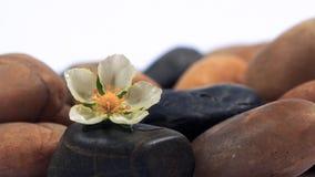 Fiori e pietre Fotografia Stock