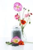 Fiori e semi del papavero Fotografia Stock