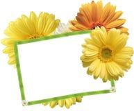 fiori e spazio in bianco della scheda Fotografie Stock