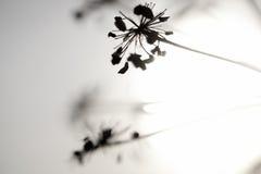 Fiori e Sun Fotografia Stock