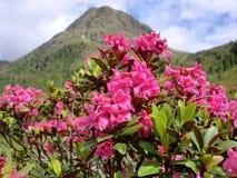 Fiori e una montagna Immagini Stock Libere da Diritti