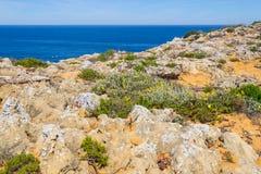 Fiori e vegetazione nella spiaggia in Almograve Immagine Stock