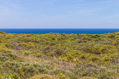 Fiori e vegetazione nella spiaggia in Almograve Fotografia Stock