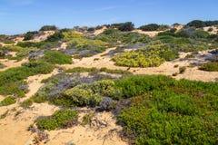 Fiori e vegetazione nella spiaggia in Almograve Fotografia Stock Libera da Diritti