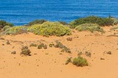Fiori e vegetazione nelle dune in Almograve Fotografia Stock Libera da Diritti