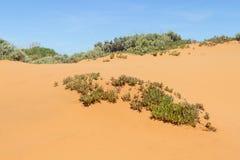 Fiori e vegetazione nelle dune in Almograve Immagine Stock