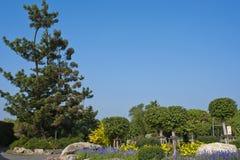 Fiori ed alberi in sosta con il cielo libero. Fotografie Stock Libere da Diritti