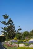 Fiori ed alberi in sosta con il cielo libero. Immagini Stock Libere da Diritti