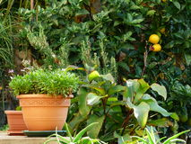 Fiori ed arance in giardino verde immagine stock libera da diritti