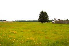 Fiori ed erba ed albero sul prato di estate di colorfu Fotografia Stock
