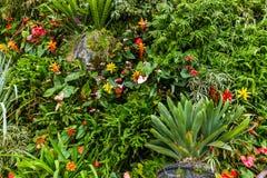 Fiori ed erba - fondo della natura fotografie stock