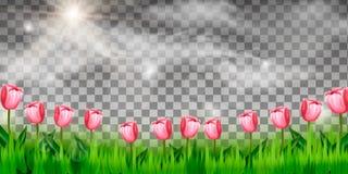 Fiori ed erba su fondo trasparente per la decorazione, illustrazione vettoriale
