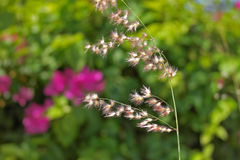 Fiori ed erba tropicali fotografie stock libere da diritti