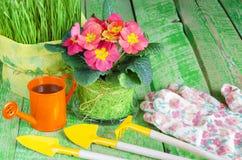 Fiori ed erba in vasi, i mezzi per preoccuparsi per loro immagini stock