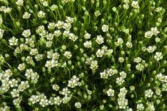Fiori ed erba verde Immagine Stock