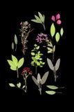 Fiori ed erbe di estate Fotografia Stock Libera da Diritti