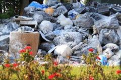 Fiori ed immondizia Fotografia Stock Libera da Diritti
